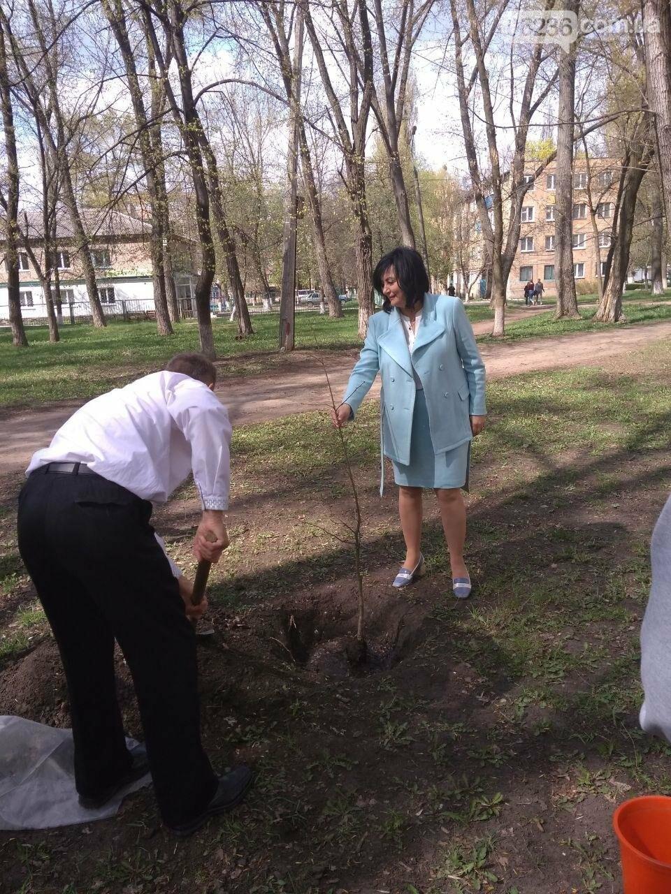 В авдеевском парке появилось особенное дерево (ФОТОФАКТ), фото-2
