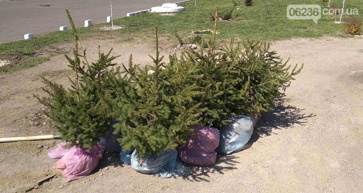 В Авдеевке приступили к массовой высадке деревьев (ФОТОФАКТ), фото-5