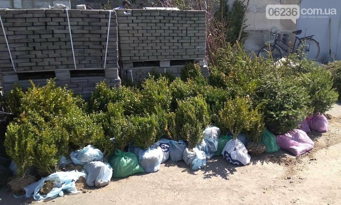 В Авдеевке приступили к массовой высадке деревьев (ФОТОФАКТ), фото-4
