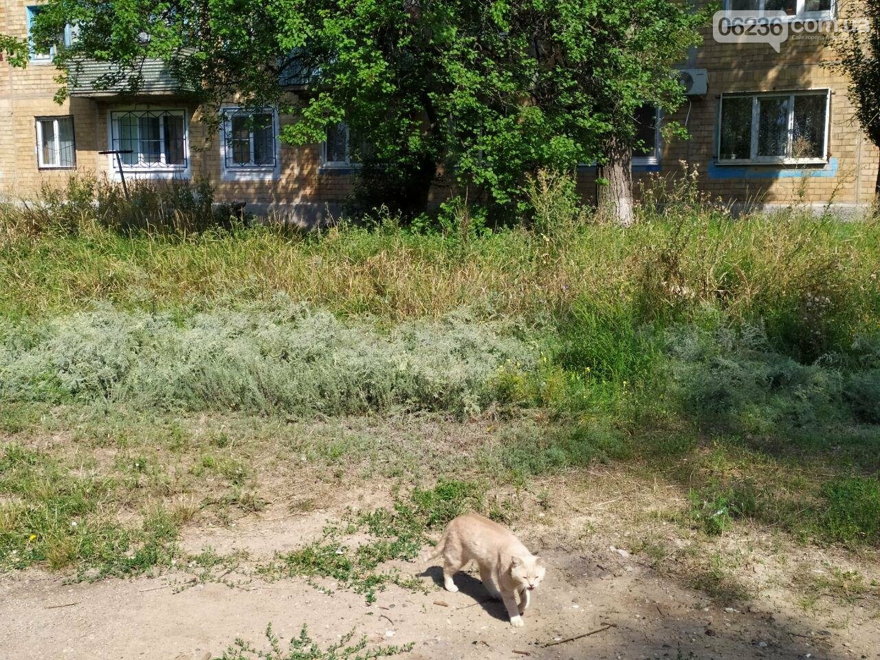 Авдеевские коммунальщики вышли на борьбу с травой (ФОТОФАКТ), фото-4